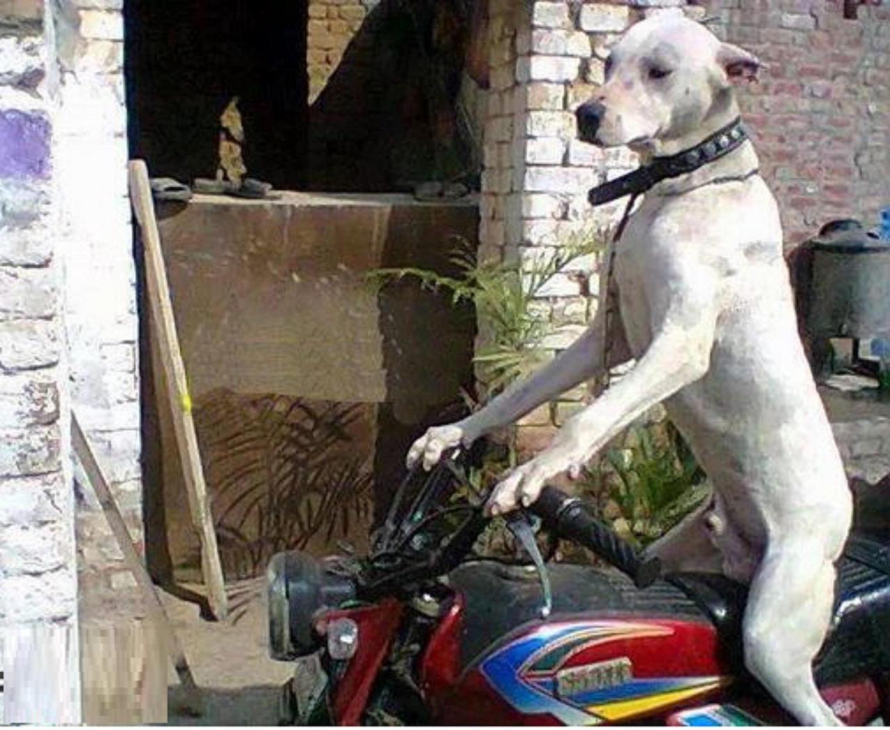 dog-riding-bike-funny-pictures-5956.jpg